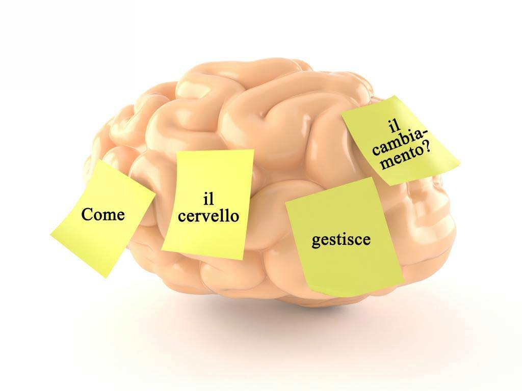 Perchè è utile per un coach conoscere le basi su come funziona il cervello?