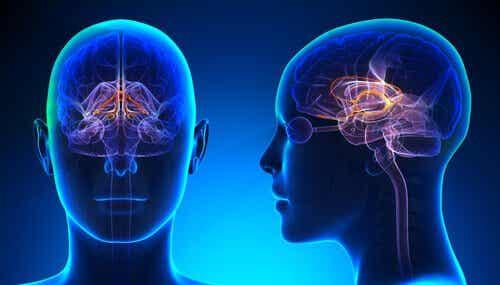 i sentimenti appartengono al lobo frontale del cervello